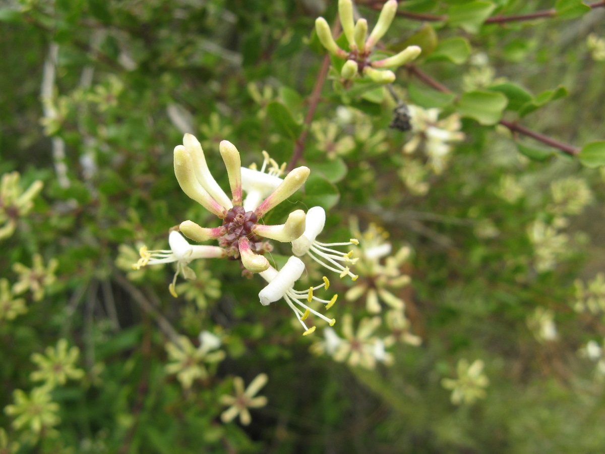 small cream colored flowers on branches