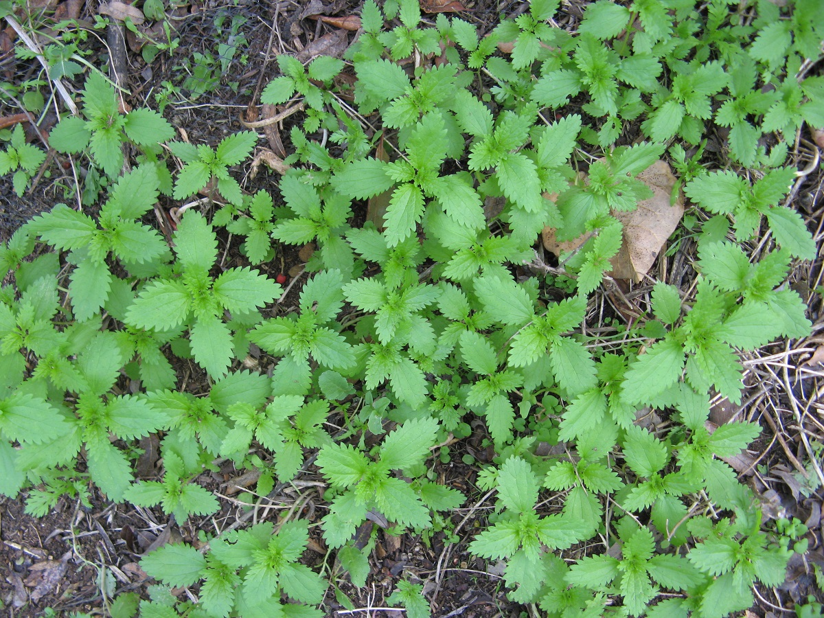 Small green leaves